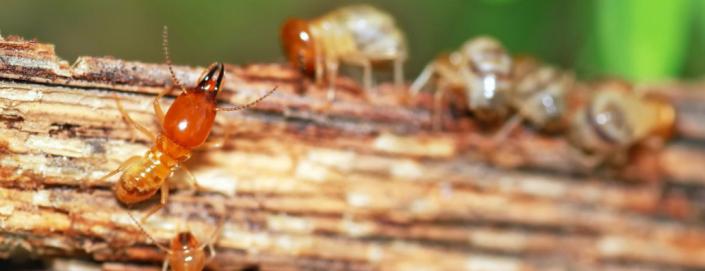 reliance-pest-control-brisbane
